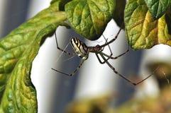 ασημένια αράχνη σφαιρών στοκ φωτογραφίες