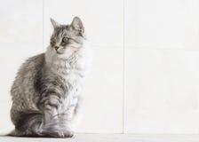Ασημένια γάτα στο arcade Στοκ Φωτογραφία