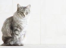 Ασημένια γάτα στο arcade Στοκ φωτογραφία με δικαίωμα ελεύθερης χρήσης
