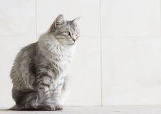 Ασημένια γάτα στο arcade Στοκ Εικόνες