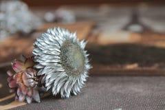 Ασημένια λουλούδια, ευχετήρια κάρτα, σύσταση Στοκ Φωτογραφίες