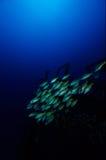 ασημένια συντρίμμια αστερ&i Στοκ εικόνα με δικαίωμα ελεύθερης χρήσης