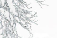 Ασημένιοι κλάδοι Στοκ Εικόνες