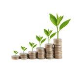 Ασημένιοι σωρός και treetop νομισμάτων στην έννοια της επιχειρησιακής αύξησης Στοκ Φωτογραφία