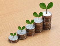 ασημένιοι σωρός και treetop νομισμάτων Στοκ Εικόνες