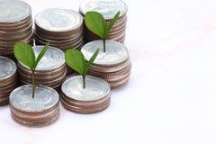 ασημένιοι σωρός και treetop νομισμάτων Στοκ Φωτογραφία