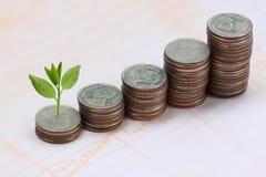 ασημένιοι σωρός και treetop νομισμάτων Στοκ φωτογραφίες με δικαίωμα ελεύθερης χρήσης