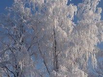 Ασημένιο ξύλο Στοκ φωτογραφία με δικαίωμα ελεύθερης χρήσης