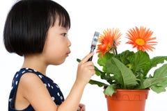 Ασιάτης λίγο κινεζικό κορίτσι που εξετάζει το λουλούδι μέσω μιας ενίσχυσης Στοκ φωτογραφία με δικαίωμα ελεύθερης χρήσης