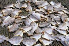 ασιατικά ξηρά τρόφιμα ψαριών Στοκ εικόνες με δικαίωμα ελεύθερης χρήσης