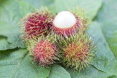 Ασιατικά φρούτα rambutan στα φύλλα, γλυκά Στοκ Εικόνα