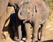 ασιατικές νεολαίες της Ταϊλάνδης ελεφάντων phuket Στοκ φωτογραφία με δικαίωμα ελεύθερης χρήσης