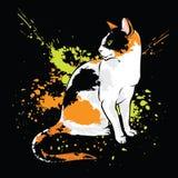Ασιατική γάτα στο μαύρο υπόβαθρο Στοκ φωτογραφία με δικαίωμα ελεύθερης χρήσης
