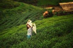 Ασιατική γυναίκα τουριστών στο αγρόκτημα φυτειών τσαγιού στο doi angkhang moun Στοκ φωτογραφίες με δικαίωμα ελεύθερης χρήσης