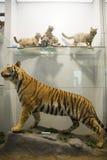 Ασιατική Κίνα, Πεκίνο, εθνικά ζωικά δείγματα ŒAnimal Museumï ¼ Στοκ Φωτογραφίες
