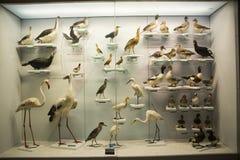 Ασιατική Κίνα, Πεκίνο, εθνικά ζωικά δείγματα ŒAnimal Museumï ¼ Στοκ εικόνες με δικαίωμα ελεύθερης χρήσης