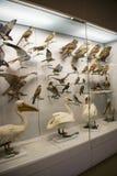 Ασιατική Κίνα, Πεκίνο, εθνικά ζωικά δείγματα ŒAnimal Museumï ¼ Στοκ Εικόνες