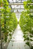 Ασιατική Κίνα, Πεκίνο καρναβάλι, γεωργία, καλλιέργεια θερμοκηπίων Στοκ εικόνα με δικαίωμα ελεύθερης χρήσης