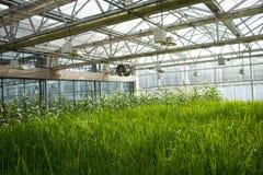 Ασιατική Κίνα, Πεκίνο καρναβάλι, γεωργία, καλλιέργεια θερμοκηπίων Στοκ Φωτογραφίες