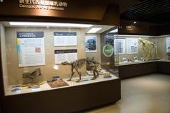 Ασιατική Κίνα, Πεκίνο, μουσείο της αρχαίας αίθουσας έκθεσης ŒIndoor animalï ¼, Στοκ εικόνα με δικαίωμα ελεύθερης χρήσης