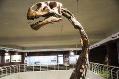 Ασιατική Κίνα, Πεκίνο, μουσείο της αρχαίας αίθουσας έκθεσης ŒIndoor animalï ¼, Στοκ εικόνες με δικαίωμα ελεύθερης χρήσης