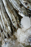 ασιατική κορδέλλα ψαριών & Στοκ φωτογραφίες με δικαίωμα ελεύθερης χρήσης