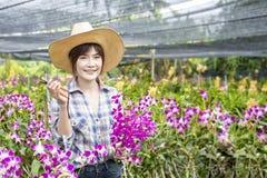 Ασιατικοί αγρότες Οι ευτυχείς θηλυκοί αγρότες συγκομίζουν τα λουλούδια ορχιδεών για την πώληση Όμορφη γυναίκα που εργάζεται στο α στοκ φωτογραφία με δικαίωμα ελεύθερης χρήσης