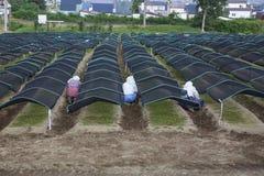 Ασιατικοί αγρότες που εργάζονται αρχειοθετημένος Στοκ φωτογραφία με δικαίωμα ελεύθερης χρήσης