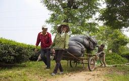 Ασιατικοί αγρότες τσαγιού που φέρνουν τις συσκευασίες του τσαγιού από το λόφο στο εργοστάσιο τσαγιού Στοκ φωτογραφία με δικαίωμα ελεύθερης χρήσης
