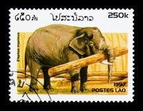 Ασιατικός ελέφαντας (maximus Elephas), ελέφαντες serie, circa 1997 Στοκ φωτογραφία με δικαίωμα ελεύθερης χρήσης
