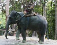Ασιατικός ελέφαντας με το ελεφαντόδοντο Στοκ Εικόνες