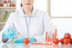 Ασιατικός θηλυκός επιστήμονας που εξετάζει την ντομάτα ΓΤΟ για τις ανθρώπινες υγείες Στοκ Φωτογραφίες