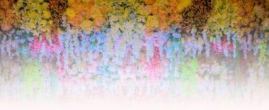 ασιατικός καρπός rambutan Στοκ φωτογραφία με δικαίωμα ελεύθερης χρήσης