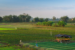 Ασιατικός πράσινος αγροτικός τομέας στην Ταϊλάνδη Στοκ Φωτογραφία