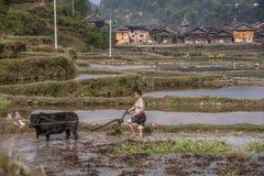 Ασιατικός plowman καλλιεργεί το έδαφος με τη χρησιμοποίηση της δύναμης ένας ταύρος, Κίνα Στοκ φωτογραφία με δικαίωμα ελεύθερης χρήσης