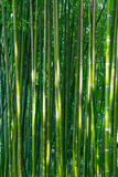 Ασιατικό δάσος μπαμπού Στοκ εικόνες με δικαίωμα ελεύθερης χρήσης