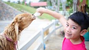 Ασιατικό αγόρι με το πόσιμο γάλα προβάτων από το μπουκάλι απόθεμα βίντεο