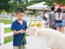 Ασιατικό αγόρι που ταΐζει ένα πρόβατο Στοκ φωτογραφίες με δικαίωμα ελεύθερης χρήσης