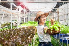 Ασιατικό καλάθι λαχανικών σαλάτας εκμετάλλευσης ευτυχών και γυναικών ομορφιάς στο αγρόκτημα Υγιής τρόπος ζωής στοκ εικόνες με δικαίωμα ελεύθερης χρήσης