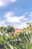 ασιατικό λουλούδι ανασκόπησης Νησί του Μπαλί Στοκ Φωτογραφίες