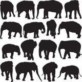 Ασιατικό περίγραμμα σκιαγραφιών ελεφάντων Στοκ Φωτογραφία