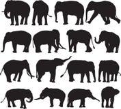 Ασιατικό περίγραμμα σκιαγραφιών ελεφάντων διανυσματική απεικόνιση