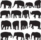 Ασιατικό περίγραμμα σκιαγραφιών ελεφάντων Στοκ φωτογραφία με δικαίωμα ελεύθερης χρήσης