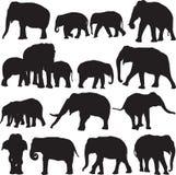 Ασιατικό περίγραμμα σκιαγραφιών ελεφάντων Στοκ εικόνα με δικαίωμα ελεύθερης χρήσης