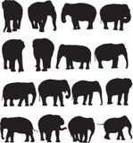 Ασιατικό περίγραμμα σκιαγραφιών ελεφάντων Στοκ Εικόνες