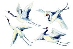 Ασιατικό σύνολο πουλιών γερανών Watercolor Στοκ Εικόνες