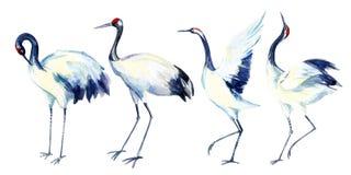 Ασιατικό σύνολο πουλιών γερανών Watercolor Στοκ εικόνες με δικαίωμα ελεύθερης χρήσης