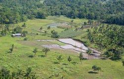 Ασιατικό τοπίο με τους φοίνικες και τους τομείς ρυζιού Στοκ εικόνες με δικαίωμα ελεύθερης χρήσης
