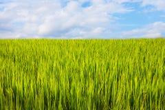 Ασιατικό τοπίο με το ricefield Στοκ φωτογραφία με δικαίωμα ελεύθερης χρήσης