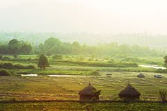 Ασιατικό τοπίο πεδίων φθινοπώρου - Ταϊλάνδη Στοκ φωτογραφία με δικαίωμα ελεύθερης χρήσης